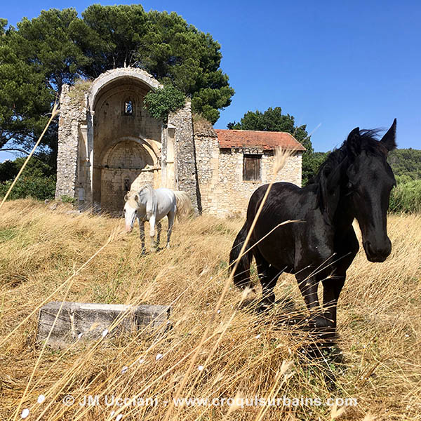 cheval provence